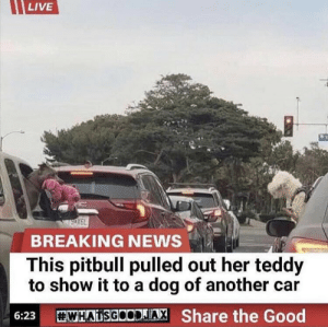 https://t.co/pXLr0h02xW: LIVE  wsox6L  BREAKING NEWS  This pitbull pulled out her teddy  to show it to a dog of another car  WHAISGOODAX Share the Good  6:23 https://t.co/pXLr0h02xW