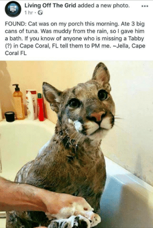 That's a weird doggo by Psykhenaut FOLLOW 4 MORE MEMES.: Living Off The Grid added a new photo.  1 hr  FOUND: Cat was on my porch this morning. Ate 3 big  cans of tuna. Was muddy from the rain, so I gave him  a bath. If you know of anyone who is missing a Tabby  (?) in Cape Coral, FL tell them to PM me. ~Jella, Cape  Coral FL That's a weird doggo by Psykhenaut FOLLOW 4 MORE MEMES.