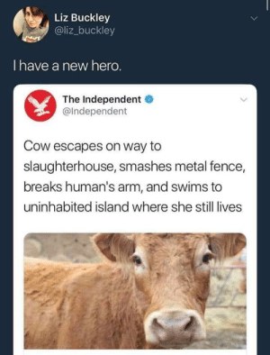 Slaughterhouse, Metal, and Hero: Liz Buckley  @liz_buckley  I have a new hero.  The Independent  @Independent  Cow escapes on way to  slaughterhouse, smashes metal fence,  breaks human's arm, and swims to  uninhabited island where she still lives I have a new hero.