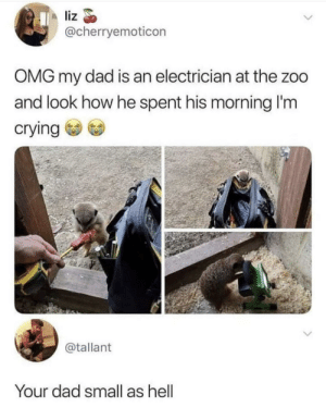 Meirl by aashirlaique MORE MEMES: liz  @cherryemoticon  OMG my dad is an electrician at the zoo  and look how he spent his morning I'm  crying  @tallant  Your dad small as hell Meirl by aashirlaique MORE MEMES