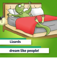 "Bloods, Brains, and Definitely: Lizards  dream like people! Our cold-blooded friends are actually more like us than we thought! It turns out that lizards have many stages of sleep, just like we do when we're trying to get some shut eye. They even have REM (rapid-eye movement) sleep, which means that, according to a new study, these scaly beasts may have the ability to dream. ""If you forced me to speculate and to use a loose definition of dreaming, I'd speculate that those dreams are about recent notable events: insects, maybe a place where there are good insects, an aggressive male in the next terrarium, et cetera. If I were an Australian dragon living in Frankfurt, I'd be dreaming of a warm day in the sun,"" said Gilles Laurent, a neuroscientist from the Max Planck Institute for Brain Research. Fun fact: REM sleep is characterized by an increased heart rate and blood pressure. GuffMedia Science"