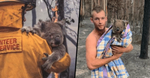 lizluvscupcakes: positive-memes:  Touching Photos of Animals Being Saved From Australian Bushfires Rage Show the Very Best of Humanity   It's not all terrible news…  no it's not :): lizluvscupcakes: positive-memes:  Touching Photos of Animals Being Saved From Australian Bushfires Rage Show the Very Best of Humanity   It's not all terrible news…  no it's not :)
