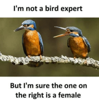"Tumblr, Blog, and Http: l'm not a bird expert  But I'm sure the one on  the right is a female <p><a href=""http://memehumor.net/post/163885453460/chirp-chirp-mf"" class=""tumblr_blog"">memehumor</a>:</p>  <blockquote><p>Chirp chirp mf</p></blockquote>"