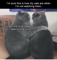 Cats, Funny, and Memes: l'm sure this is how my cats are when  I'm not watching them...  You get the toilet paper  and l'll destroy the couch Afternoon Funny Memes 36 Pics
