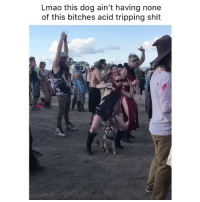 Lmao, Memes, and Omg: Lmao this dog ain't having none  of this bitches acid tripping shit Omg the Rugrats theme has me shook to shit though 🎶 whatisthisfuckery dogaintimpressed