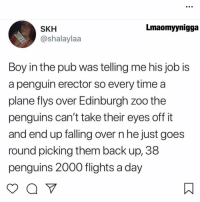 Memes, Penguin, and Penguins: Lmaomyynigga  SKH  @shalaylaa  Boy in the pub was telling me his job is  a penguin erector so every time a  plane flys over Edinburgh zoo the  penguins can't take their eyes off it  and end up falling over n he just goes  round picing them back up, 38  penguins 2000 flights a day 😩