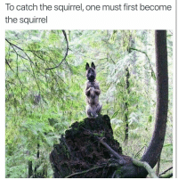 Namaste mother pupper: lo catch the squirrel, one must first become  the squirrel Namaste mother pupper