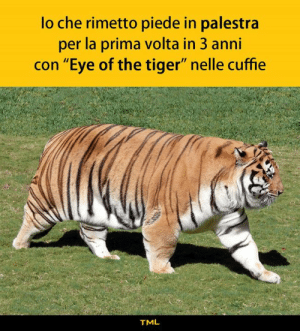 "Memes, Eye of the Tiger, and Tiger: lo che rimetto piede in palestra  per la prima volta in 3 anni  con ""Eye of the tiger"" nelle cuffie  TML Risin' up, straight to the lasagne"