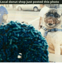 donut shop: Local donut shop just posted this photo