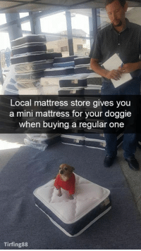Mattress, Doggo, and Mini: Local mattress store gives you  a mini mattress for your doggie  when buying a regular one  Tirfing88 little doggo mattress