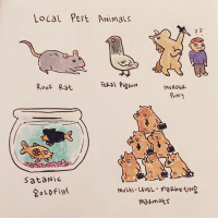Pests. sketchshark: Local PESt ANimals  Roof Rat  MURDER  Sat Nic  ma mats Pests. sketchshark