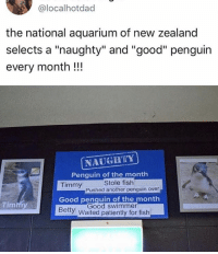 "Memes, Aquarium, and Fish: @localhotdad  the national aquarium of new zealand  selects a ""naughty"" and ""good"" penguin  every month!!!  NAUGRTY  Penquin of the month  Stole fish  Timmy  Good penquin of the month  Bety Waited patiently for fish  Pushed another penguin over  Timmy  Good swimmer 😂😂lol"