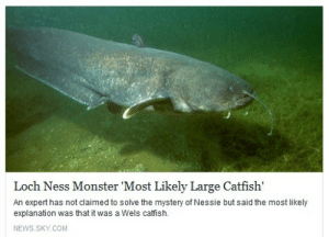 Catfished, Loch Ness Monster, and Monster: Loch Ness Monster Most Likely Large Catfish  An expert has not claimed to solve the mystery of Nessie but said the most likely  explanation was that it was a Wels catfish.  NEWS.SKY.COM smallmangosteen: cant believe nessie is rly a 34 yr old accountant from akron, ohio