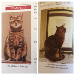 seungristrawberry:  The author of my math book just decides to throw in pictures of his cats every so often through the chapters… : log 7.1  log4.38  - 1.32703  log 4.38  Su  SOLUTION log4.38 7.1  EXAMPLE 2  th  loi  SO  drutie funtions and Cos  al th the  d h  the  To  So  su  ab  The author's second cat  The author's first cat.  proofreading the manuscript. seungristrawberry:  The author of my math book just decides to throw in pictures of his cats every so often through the chapters…