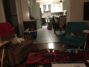 Two most comfy chairs are occupied by cats: LOGNETSPOONS  pep Two most comfy chairs are occupied by cats