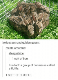 Best shit ever: lokis-green-and-golden-queen:  mecto-amorous:  slee  shibe  1 sq ft of bun  Fun fact: a group of bunnies is called  a fluffle.  1 SQFT OF FLUFFLE Best shit ever