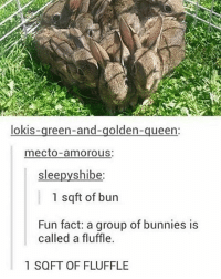 My favorite unit of measure :): lokis  reen-and-golden  queen:  mecto amorous:  slee  shibe  1 sqft of bun  Fun fact: a group of bunnies is  called a fluffle.  1 SQFT OF FLUFFLE My favorite unit of measure :)