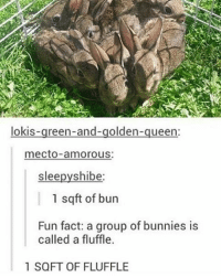 I won't have WiFi today sigh: lokis  reen-and-golden  ueen  mecto amorous:  slee  shibe  1 sq ft of bun  Fun fact: a group of bunnies is  called a fluffle.  1 SQFT OF FLUFFLE I won't have WiFi today sigh
