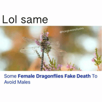 Fake, Life, and Lol: Lol same  @hoegivesnofucks  Some Female Dragonflies Fake Death To  Avoid Males Story of my life