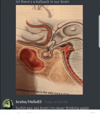 💔💔: lol there's a ballsack in our brain  pothalamus and lies in the sella tur  brsike/Hello83  Today at 9:51 PM  fuckin gay ass brain i'm never thinking again 💔💔