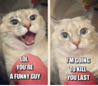 Funny, Lol, and Cat: LOL  YOURE  A FUNNY GUY  TM GOING  TO KILL  YOULAST <p>Every Relationship With A Cat.</p>