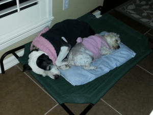 Lola and Gali were not BFF,'s, but you gotta do what you gotta do when it's cold outside!: Lola and Gali were not BFF,'s, but you gotta do what you gotta do when it's cold outside!