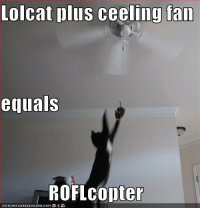 roflcopter: Lolcat plus ceeling fan  equals  ROFL copter