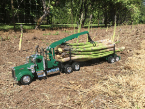 Tumblr, Asparagus, and Blog: loloftheday:  Good asparagus crop in Michigan this year!
