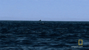 lolzandtrollz:  Rays Flying Out Of The Water: lolzandtrollz:  Rays Flying Out Of The Water