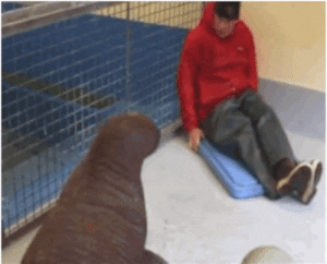 Tumblr, Blog, and Baby: lolzandtrollz:Rescued baby walrus snuggles with her caretaker…