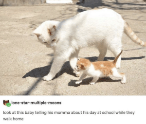 Wholesome as heck: lone-star-multiple-moons  look at this baby telling his momma about his day at school while they  walk home Wholesome as heck