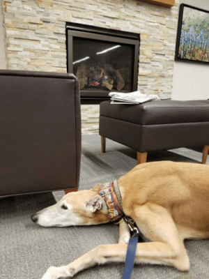 Children, Library, and Waiting...: Lonely-Looking Greyhound Is Waiting For Children To Read To Him In A Library