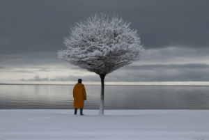Lonely tree, lonely man: Lonely tree, lonely man