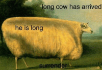 cow: long cow has arrived  he is long  surrender