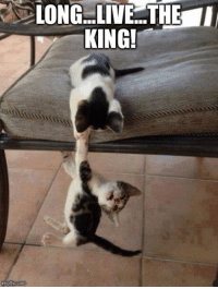 Memes, Pictures, and Long Live: LONG LIVE THE I  KING!  mgflip.com (y) Funny Cat Pictures  If you enjoy our updates and want to see them regularly you have to interact with them or turn on notifications for the fanpage.