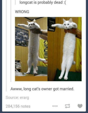 Long cat: longcat is probably dead:(  WRONG  Awww, long cat's owner got married.  Source: erarg  284,156 notes Long cat