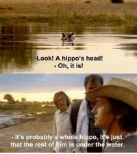 Head, Water, and Dank Memes: -Look! A hippo's head!  - Oh, it is!  -It's probably a whole hippo, it's just  that the rest of him is under the water.