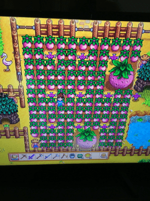 Look at all the pink cake I am making :) I have another bunch of them on the other side of the farm as well. I love getting giant crops. 2 of my favorite things melons and pink cake lol: Look at all the pink cake I am making :) I have another bunch of them on the other side of the farm as well. I love getting giant crops. 2 of my favorite things melons and pink cake lol