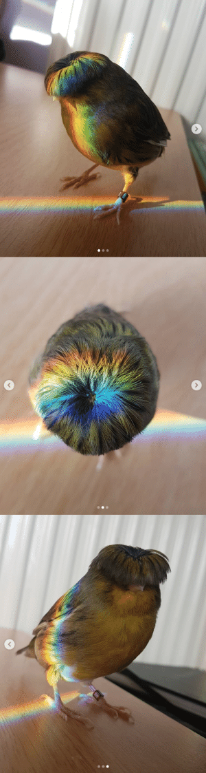 Look at how beautiful this bird is🌈🐦(Source): Look at how beautiful this bird is🌈🐦(Source)