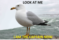 LOOK AT ME  AM FHE CAPTAIN Now The primary thing on my mind when watching the trailer for Sully