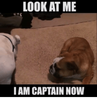LOOK AT ME  I AM CAPTAIN NOW