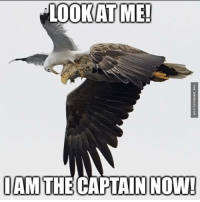 LOOK AT ME!  IAM THE CAPTAIN NOW! How To Train Your Eagle http://www.damnlol.com/how-to-train-your-eagle-115365.html