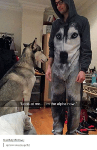 "im the alpha: ""Look at me... I'm the alpha now.""  tastefully offensive:  I (photo via upnupchi)"