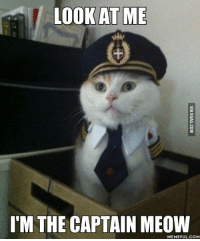 Grumpy Cat, Meow, and  Captain: LOOK AT ME  I'M THE CAPTAIN MEOW  MEMEFUL COM