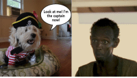 Avast! Dog pawrates ahead.: Look at me!  I'm  the captain  now! Avast! Dog pawrates ahead.