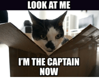 LOOK AT ME  I'M THE CAPTAIN  NOW Catpain Phillips