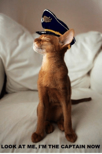 Caturday, Memes, and 🤖: LOOK AT ME, I'M THE CAPTAIN NOW It's CATURDAY!!!