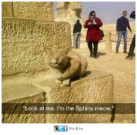 Meowe: Look at me. I'm the Sphinx meow.  t f  Postize