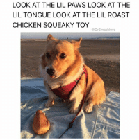 Af, Ass, and Bless Up: LOOK AT THE LIL PAWS LOOK AT THE  LIL TONGUE LOOK AT THE LIL ROAST  CHICKEN SQUEAKY TOY  @Drsmashlove Relatable AF because I keep it G at all times but no matter what time of day or night if I see a lopsided ass Floofy McFloofington with adorable features I'll lose it right then and there and start talking jibberish to the lil motherfucker and giving it mouth kisses I don't give no fucks, I got a soft spot for warm Punani and cute puppers EVERYBODY GOT A WEAKNESS (or two 🤗) BLESS UP 😂😂😂