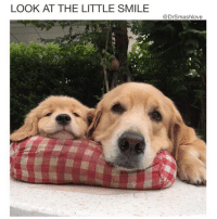 """Cute, Memes, and Smile: LOOK AT THE LITTLE SMILE  @DrSmashlove Papa got that look on his face like """"I coulda swore I pulled out 😕"""" ... there there, papa ... there there 😂😂😂 (pic credit @cookie_cute ... Editor's Note: The human who takes care of these babies wrote to me to tell me they are actually sisters 😍🙌)"""